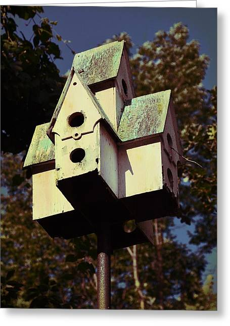 House Sparrow Greeting Card by JAMART Photography