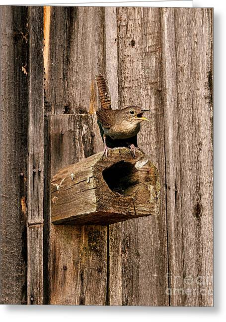 House Wren And House Greeting Card