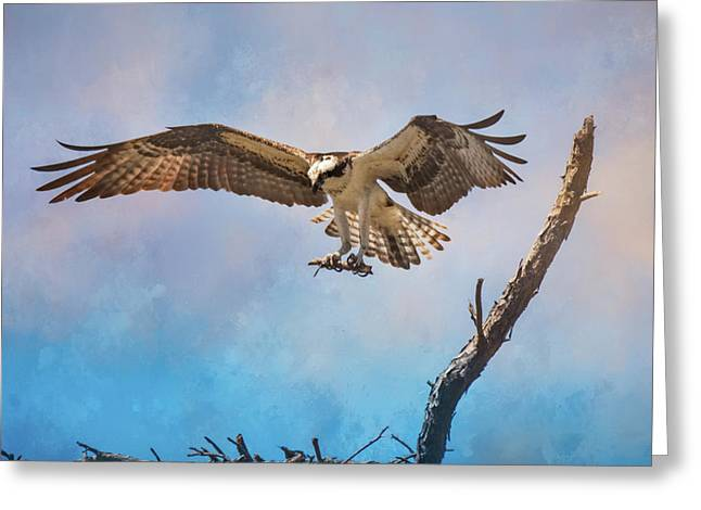 Housekeeping Osprey Art Greeting Card