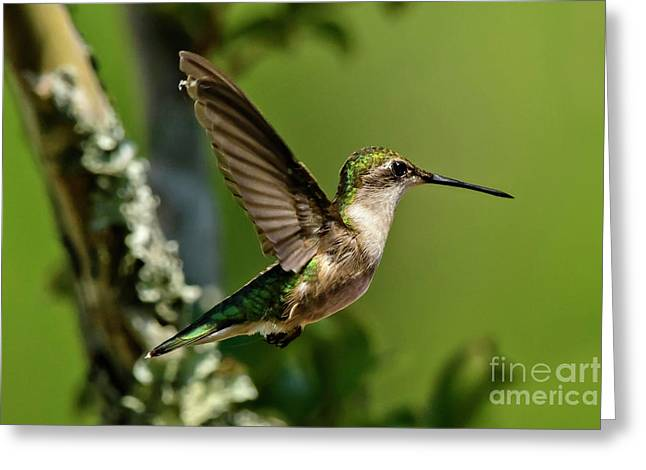 Greeting Card featuring the photograph Hover by DJA Images