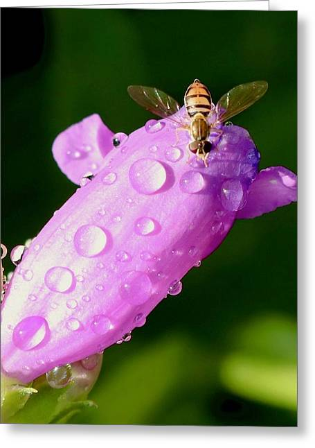 Hoverfly On Pink Flower Greeting Card