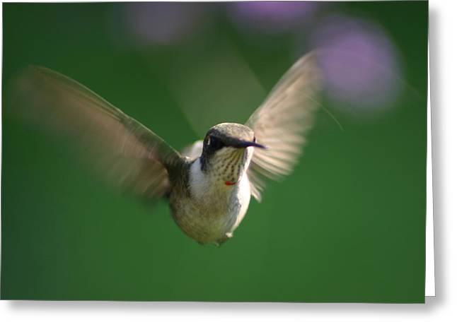 Hovering Hummingbird Greeting Card by Robert E Alter Reflections of Infinity