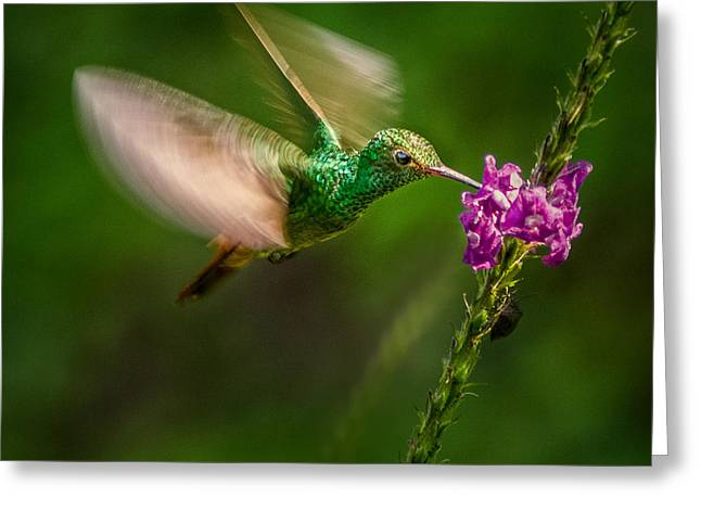 Greeting Card featuring the photograph Hovering In The Vervain  by Rikk Flohr