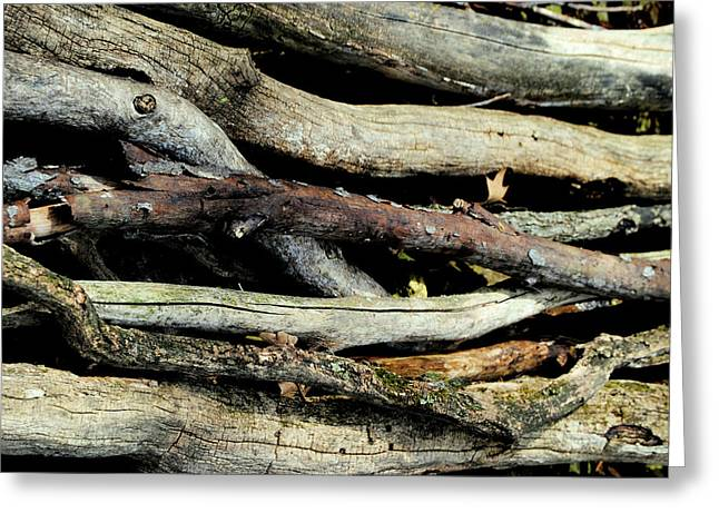 How Much Wood Would A Woodchuck Chuck Natural Wood Pile Ledge Park Wisconsin Greeting Card by Laura Pineda