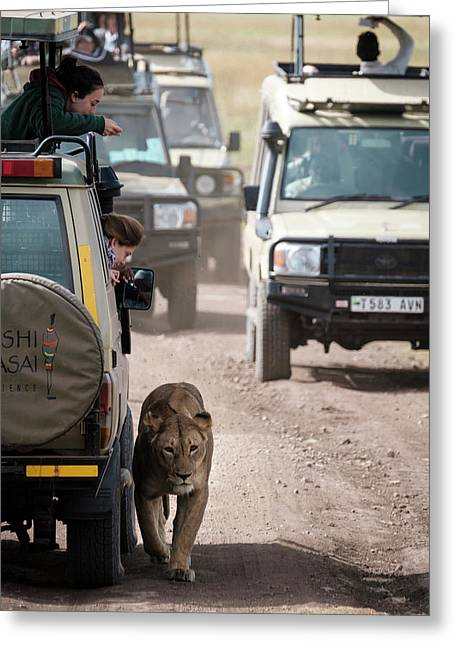 How To Find A Lion In The Serengeti Greeting Card