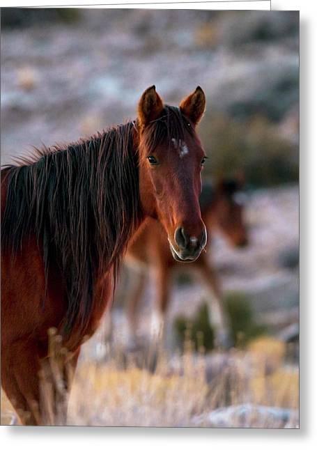 Howdy Greeting Card by Bryan Steffy
