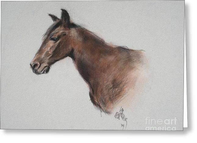 Huck At The Morgan Horse Ranch Prns Greeting Card