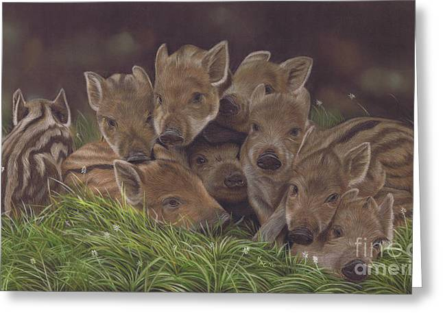 Huddle Of Humbugs Greeting Card