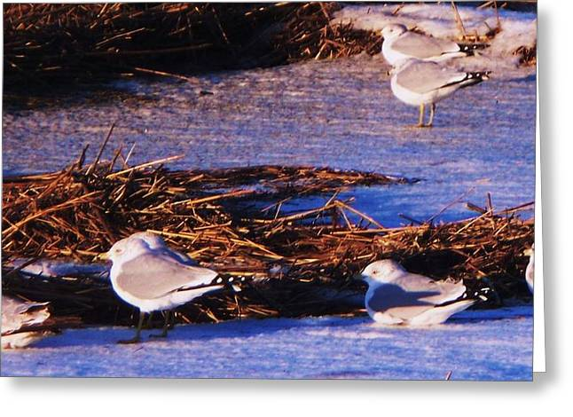 Huddling On A Winter Day  Greeting Card by Eric  Schiabor