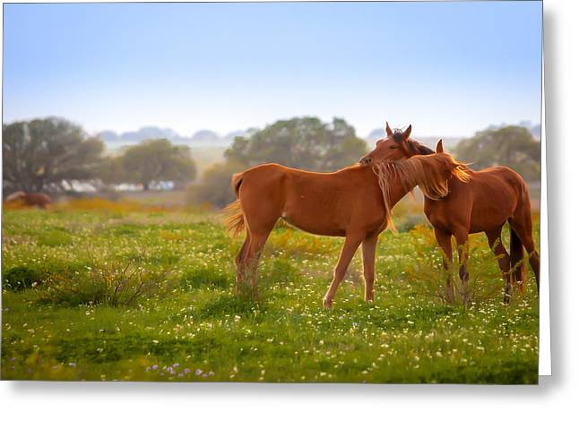 Greeting Card featuring the photograph Hug It Out by Melinda Ledsome