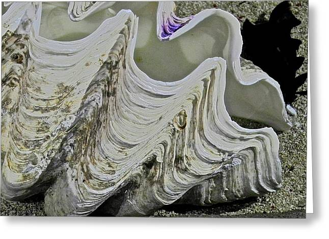Huge Clam Shell Greeting Card by Kirsten Giving