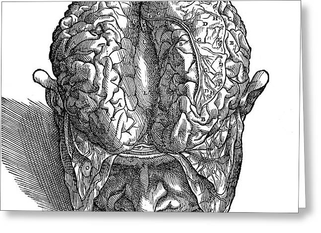 Human Brain, Vesalius, 16th Century Greeting Card by Wellcome Images