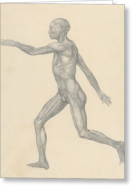Human Figure, Lateral View, After Removal Of The Skin And The Underlying Facial Layers  Greeting Card by George Stubbs