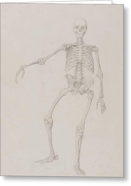 Human Skeleton, Anterior View Greeting Card by George Stubbs