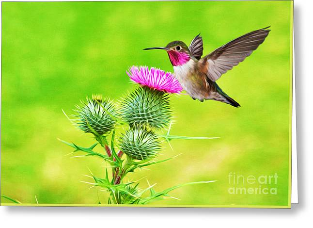 Hummer Hover Dance Greeting Card