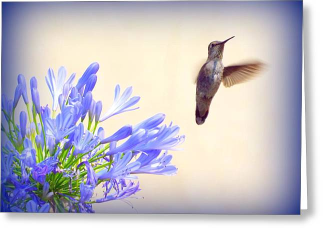 Hummer In Blue Greeting Card