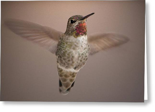 Hummer Love Greeting Card by Holly Ethan