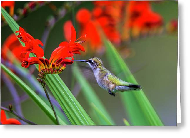 Hummer Lunch Greeting Card