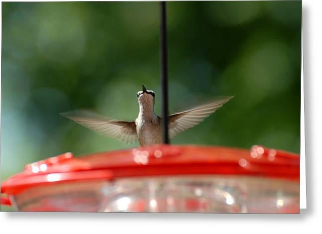 Humming Bird 71 Greeting Card by Joyce StJames