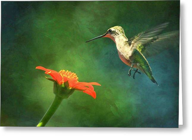 Humming Bird And Zinnia With Textures Series Greeting Card
