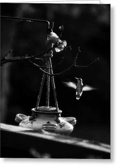 Humming Bird Humming Bird At Sunrise Bw Greeting Card