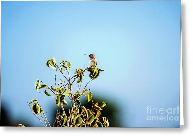Greeting Card featuring the photograph Humming Bird On A Branch by Micah May