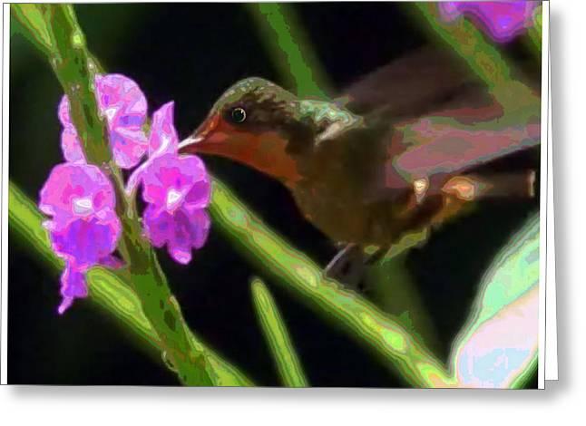Humming Bird Sucking On Pink Purple Flowers Greeting Card by Navin Joshi