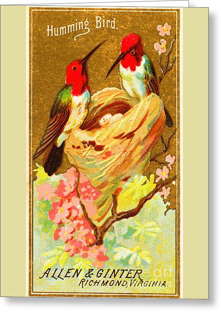 Humming Bird Victorian Tobacco Card By Allen And Ginter Greeting Card