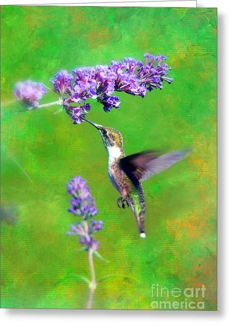 Humming Bird Visit Greeting Card