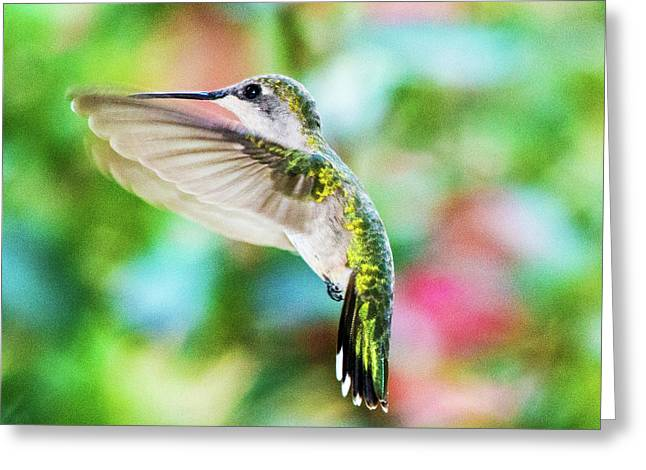 Hummingbird 06 - 9-13 Greeting Card by Barry Jones