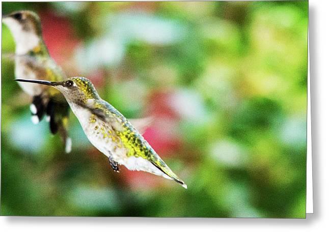 Hummingbird 07 - 9-13 Greeting Card by Barry Jones
