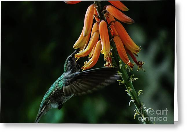 Hummingbird 1 Greeting Card by Chandra Nyleen