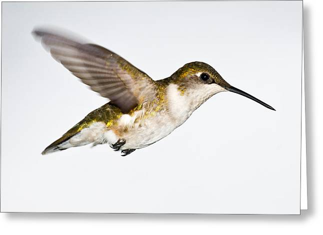 Hummingbird 2 Greeting Card by Edward Myers
