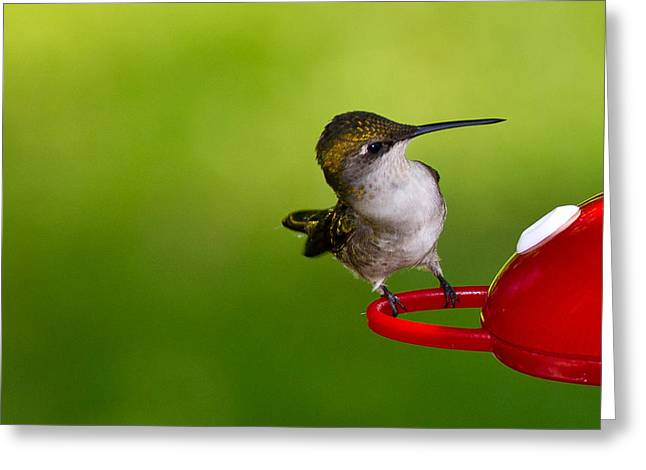 Hummingbird 5 Greeting Card by Edward Myers