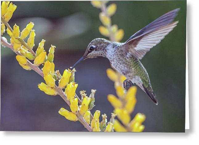 Hummingbird 6750-041818-1cr Greeting Card