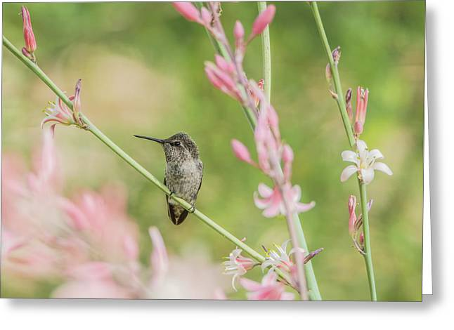 Hummingbird 7750-17 Greeting Card by Tam Ryan