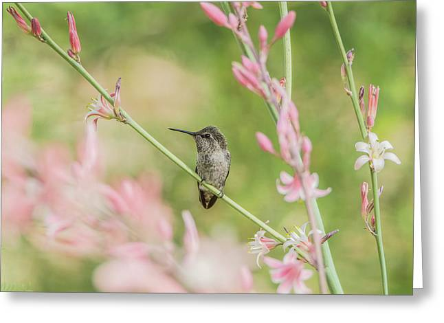 Hummingbird 7750 Greeting Card by Tam Ryan