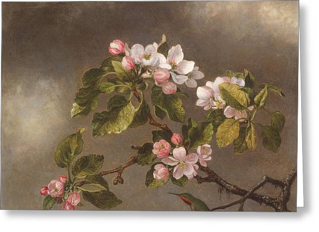 Hummingbird And Apple Blossoms Greeting Card