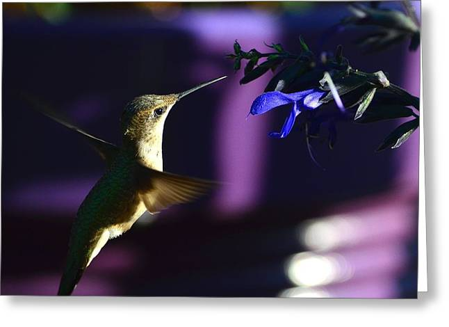 Hummingbird And Blue Flower Greeting Card