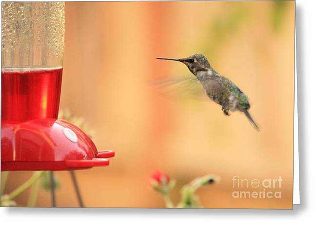 Hummingbird And Feeder Greeting Card