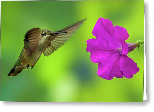Hummingbird And Flower Greeting Card