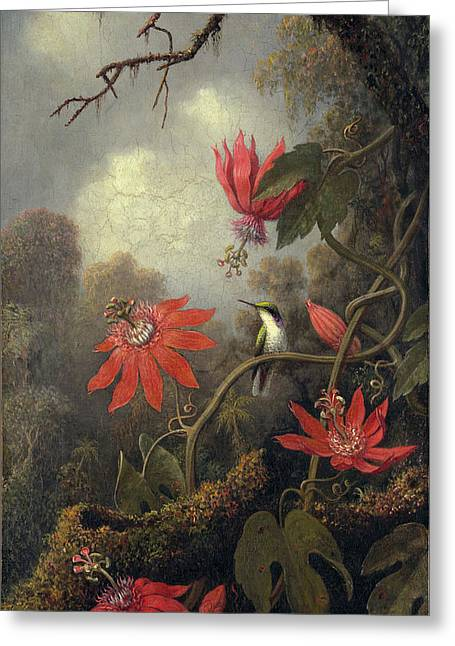 Hummingbird And Passion Flowers Greeting Card by Martin Heade