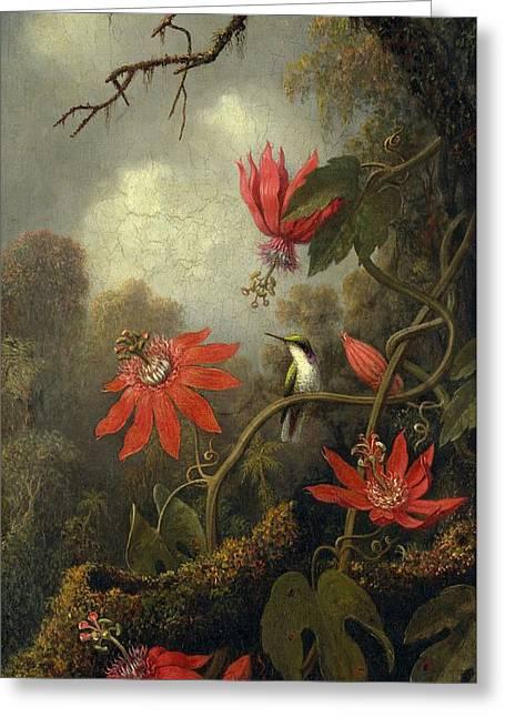 Hummingbird And Passionflowers , Martin Johnson Heade 1819-1904 Greeting Card