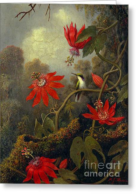 Hummingbird And Passionflowers 1877 Greeting Card by Padre Art