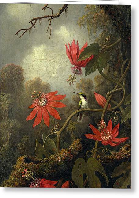 Hummingbird And Passionflowers Greeting Card by MotionAge Designs
