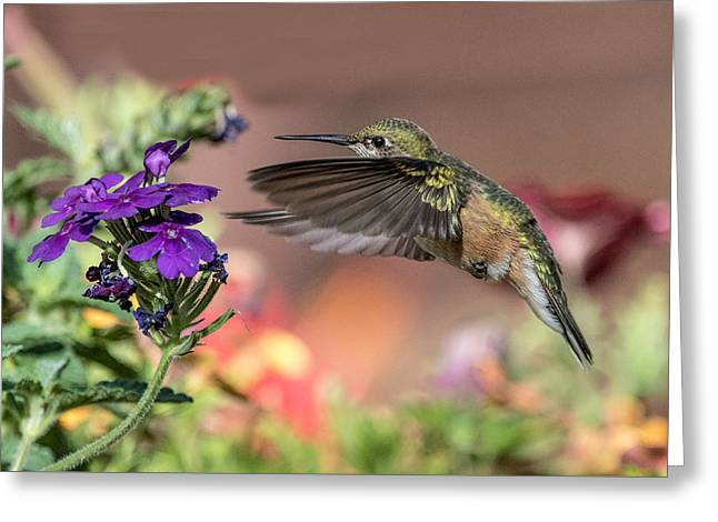 Hummingbird And Purple Flower Greeting Card