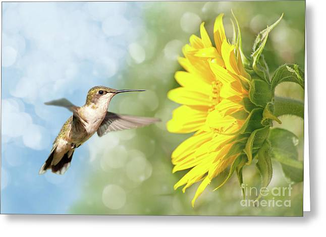 Hummingbird And Sunflower Greeting Card