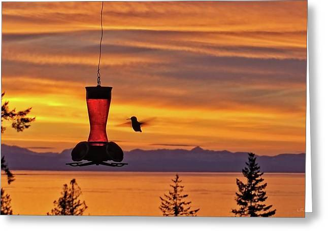 Hummingbird At Sunset. Greeting Card