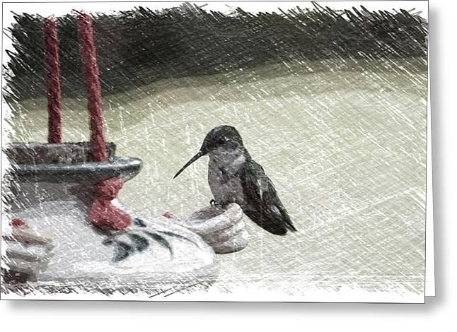 Hummingbird At The Feeder Pa 05 Greeting Card
