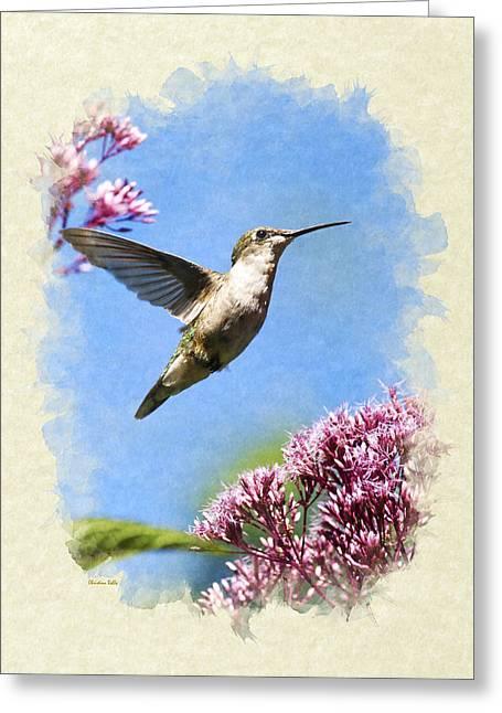 Hummingbird Beauty Blank Note Card Greeting Card